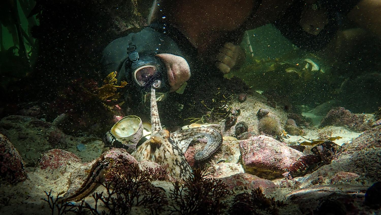 octopusteacher